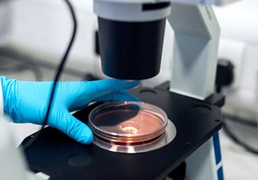 Demodex skin mites hitch rides to the lab in pathology samples. Photo by ThisisEngineering RAEng on Unsplash.